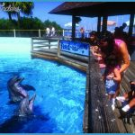 Mississippi Attractions Dolphins | Explore visitmississippi ...