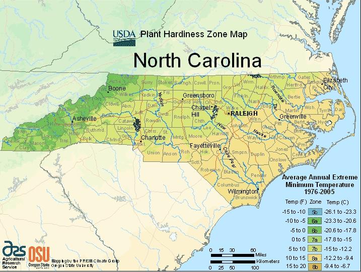 North Carolina Planting Zones – USDA Map Of North Carolina Growing