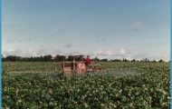 Aroostook County Potato Spraying | Maine | Pinterest