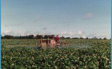Aroostook County Potato Spraying | Maine | Pinterest