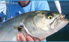 Food Pantry Delivers Fresh Bluefish to Needy   NewEnglandBoating.com
