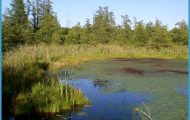 Bogs Wetland Volo bog open-water center.jpg