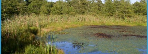 Bogs Wetland Volo bog open-water center.jpg