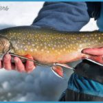 Eastern Brook Trout The winter brook trout angler