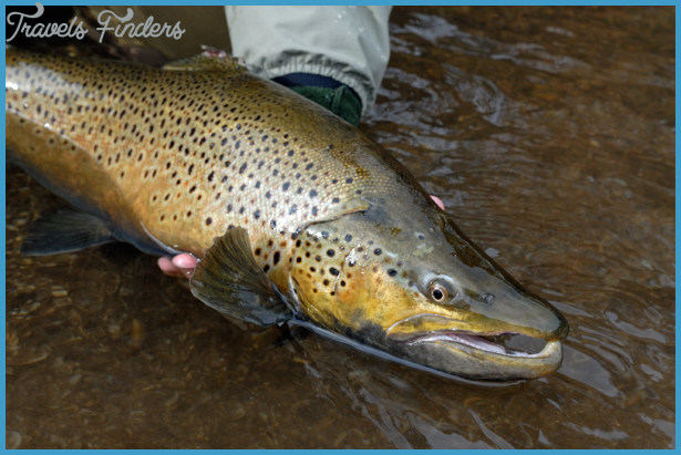 Download image Brown Trout Fishing PC, Android, iPhone and iPad