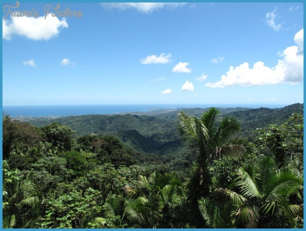 El Yunque National Rainforest | Favorite Places | Pinterest