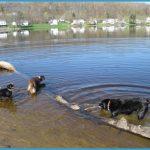 Lake Gardner, Amesbury | Walking with Dogs in Greater Newburyport