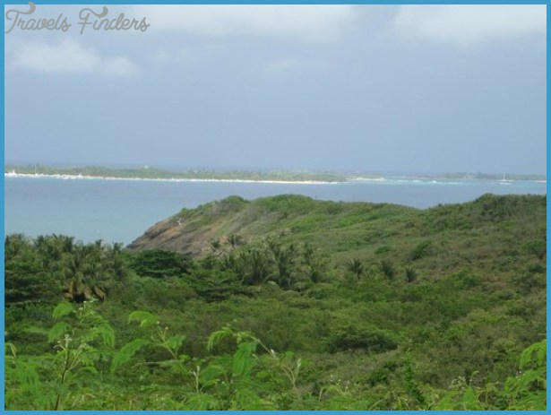Mangroves - Picture of Las Cabezas de San Juan Nature Reserve, Fajardo ...