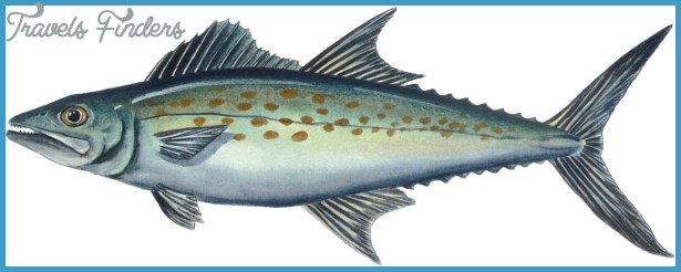 Ciguatera poisoning Spanish mackerel case a wake-up call' for