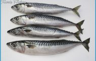Pike Bait | Mackerel | Quality fresh pike baits - Gadda Baits