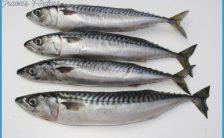 Pike Bait   Mackerel   Quality fresh pike baits - Gadda Baits