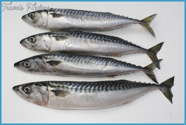 Pike Bait | Mackerel | Quality fresh pike baits - Gadda Baits