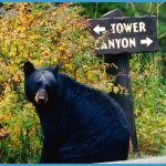 Yellowstone's Northeast Entrance to Tower-Roosevelt Junction | The