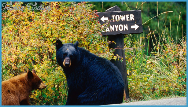 Yellowstone's Northeast Entrance to Tower-Roosevelt Junction | The ...