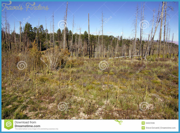 Aftermath of forest fire of 2000, Kaibab Plateau, Arizona.