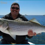 Pin Striped Bass Fishing Stripers Rockfish Stripersurfcom Saltwater on