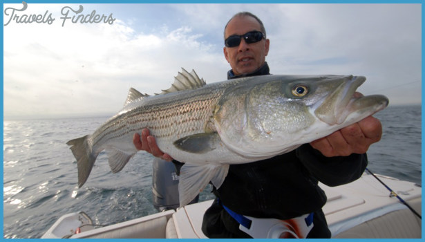 Fishing Whitewater Zones for Striped Bass | NewEnglandBoating.com