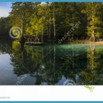 the Morrison Springs state park beach, Cypress Treeline and down river ...