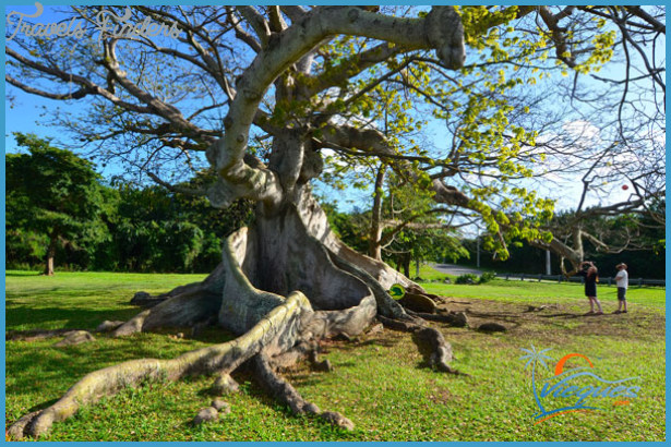 Vieque /> Attractions in Vieques, Puerto Rico > La Ceiba Tree&#8221; width=&#8221;615&#8243; height=&#8221;410&#8243; /></p> <p><img class=