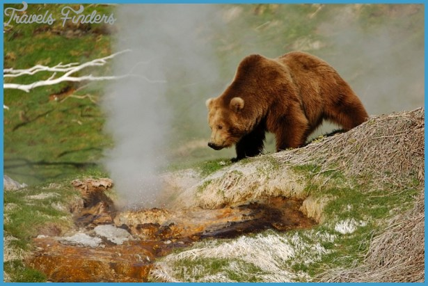 The valley of geysers in Kamchatka, the only one geyser field in