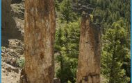Yellowstone-petrified-trees.jpg