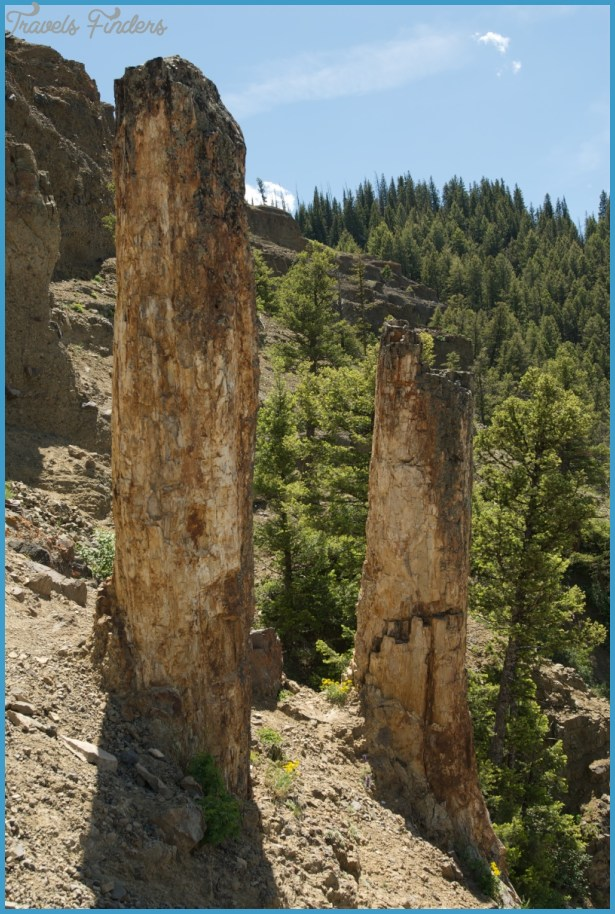 Yellowstone-petrified-trees.jpg