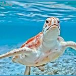 island-tour-and-turtle-farm-cayman.jpg?w=358