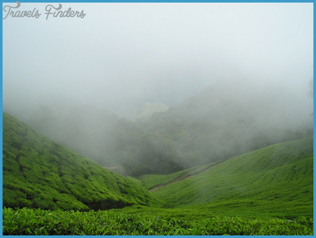 Best-time-to-Visit-Munnar-may-or-july-.jpg