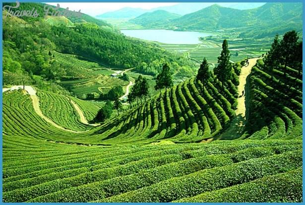 Darjeeling_Tourism3.jpg