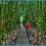 maui-hawaii-pictures-bamboo-1.jpg