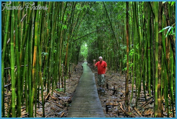 maui-hawaii-pictures-bamboo-1.jpg