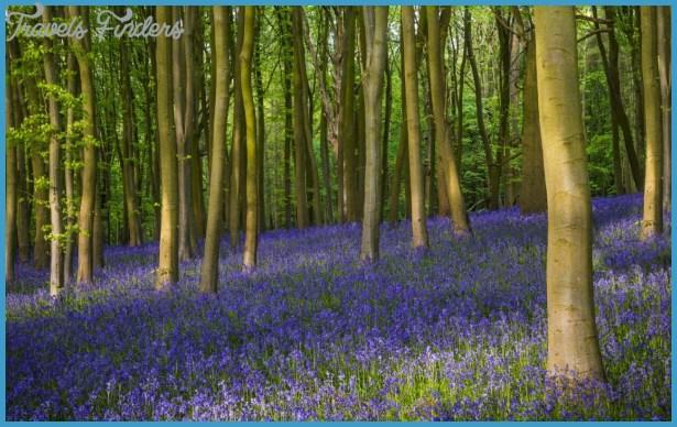 bluebell-oxfordshire-xlarge.jpg