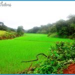 grasslands-indian-monsoon.jpg?w=838