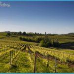 italy-wine-piedmont-vineyard-xlarge.jpg