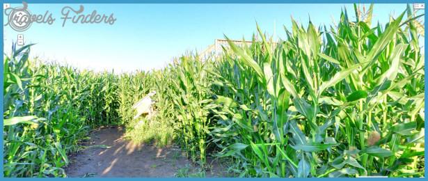 Edmonton Corn Maze Map_16.jpg