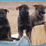 RCMP Police Dog Service Training Centre_27.jpg