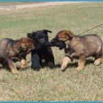 RCMP Police Dog Service Training Centre_5.jpg