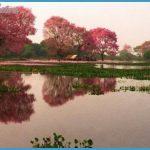 Departamento Alto Paraguay - The Pantanal_1.jpg