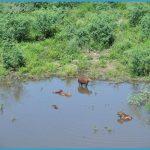 Departamento Alto Paraguay - The Pantanal_19.jpg