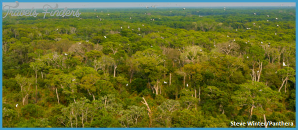 Threats to the Pantanal_15.jpg