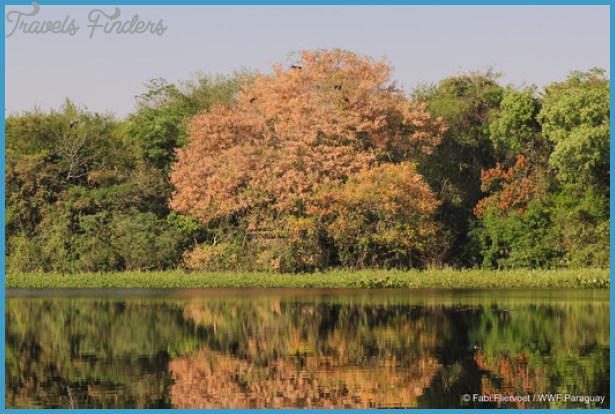 Threats to the Pantanal_7.jpg