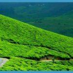 Traveling in Munnar _5.jpg