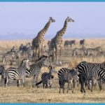 Safari Holiday to Tanzania_16.jpg