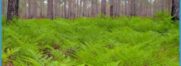 THROUGH THE GREEN SWAMP_2.jpg