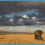 Maasai Mara Kenya_2.jpg