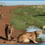 Maasai Mara Kenya_6.jpg
