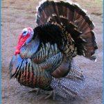 Turkey_6.jpg
