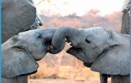 Africa Responsible Wildlife Travel_10.jpg