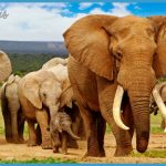 Africa Wildlife Travel Tours_0.jpg