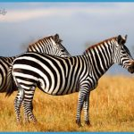 Africa Wildlife Travel Tours_1.jpg